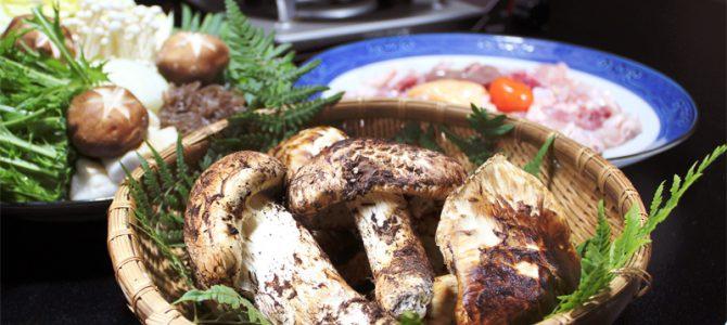 地元産の松茸!美山産地鶏✕松茸の豪華すき焼き